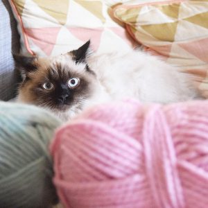 Cat with yarn
